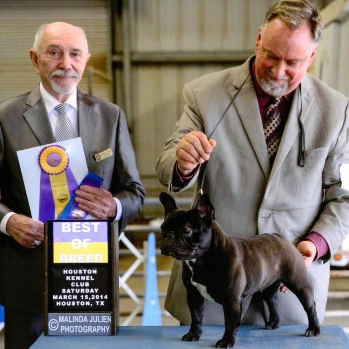 Bull Run Kennel: AKC Registered French Bulldog & BullMastiff